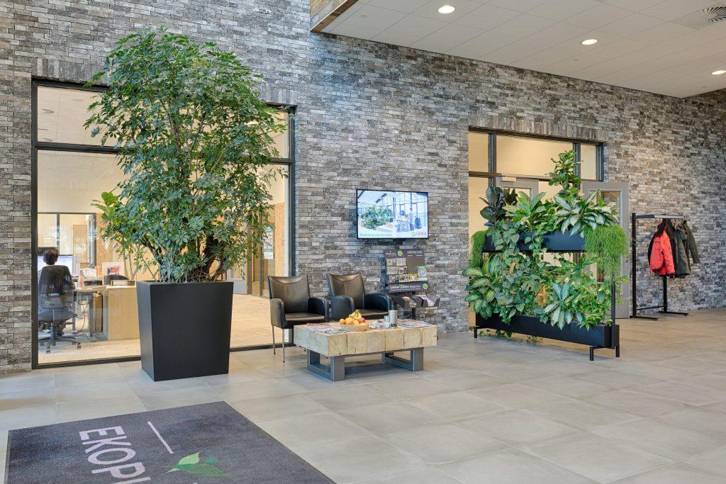 De entreehal bij UDEA met een mynthe als groene roomdivider en een grote plant